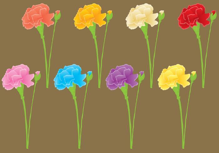 Carnation Vectors