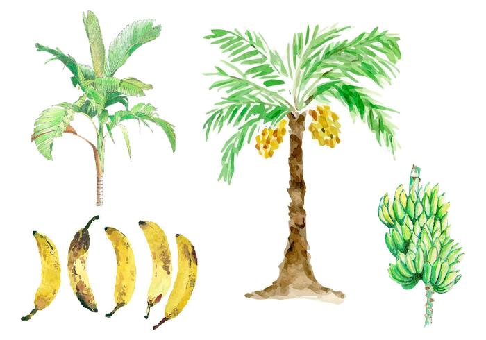 Vetores de árvore de banana aquarela