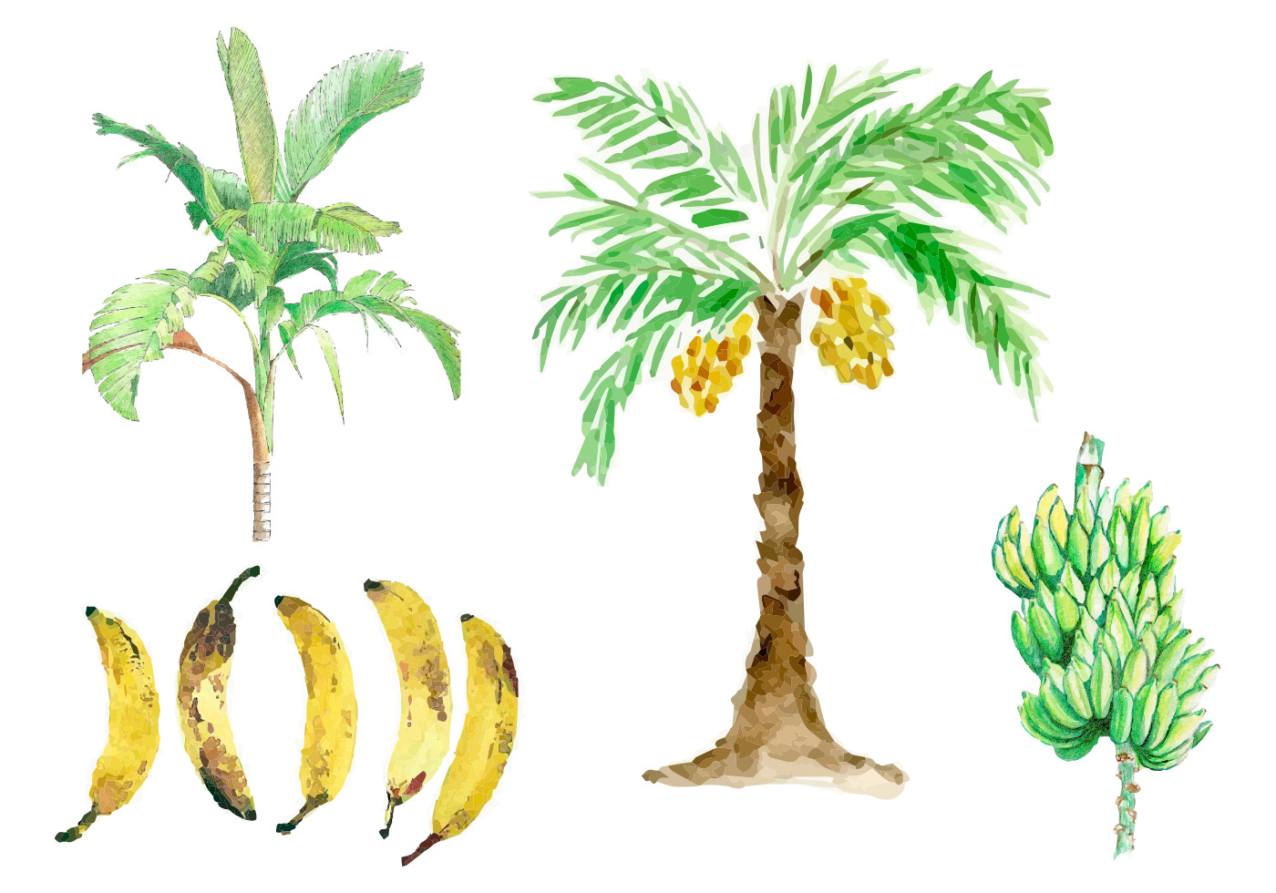 Watercolor Banana Tree Vectors - Download Free Vector Art ...