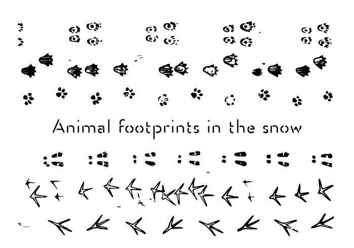 Free Animal Footprints Vector Background