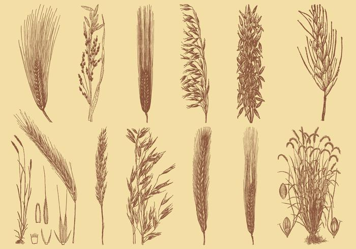 Old Style Drawing Grains