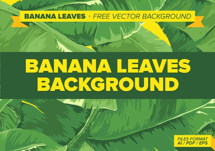 Banana Leaves Free Vector Background