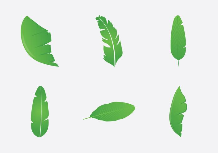 Free Banana Leaf Vector Illustration