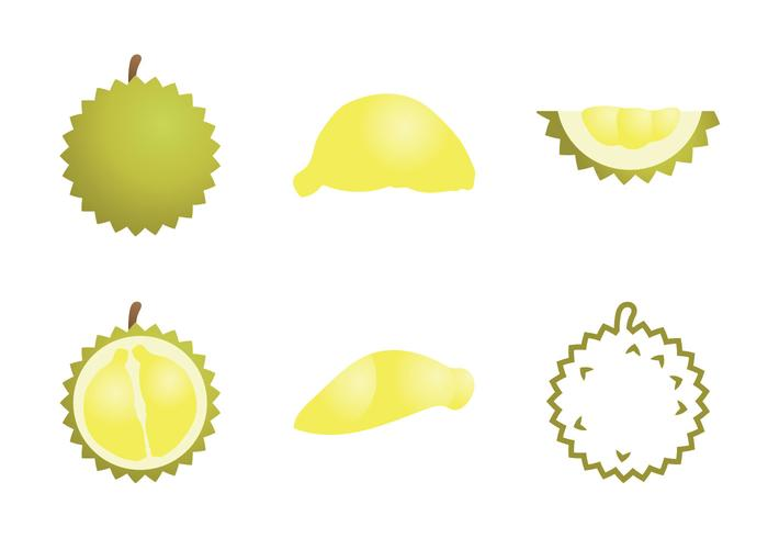 Free Durian Vector Illustration