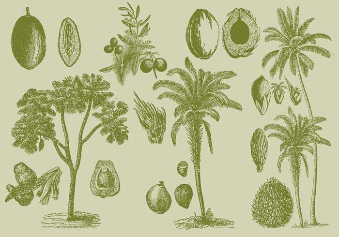 Old Style Drawing Palms