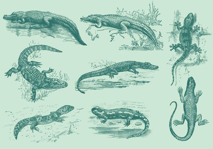 Lizards And Gators vector