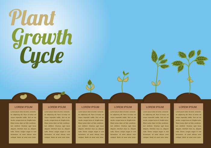 Plant Growth Circle Vector