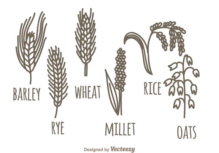 Cereales Plant Set vector