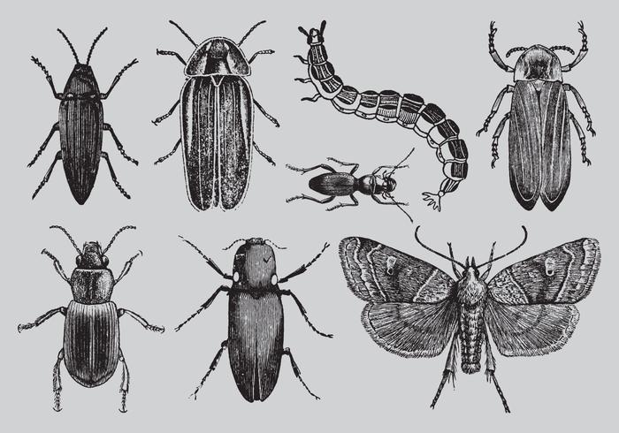 Alte Stil Zeichnung Bugs