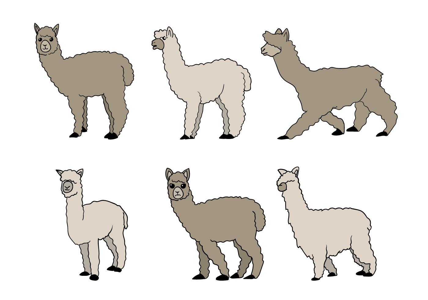 Alpaca Vector - Download Free Vectors, Clipart Graphics ...