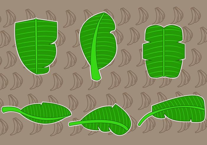 Tropical Banana Leaf Vectors