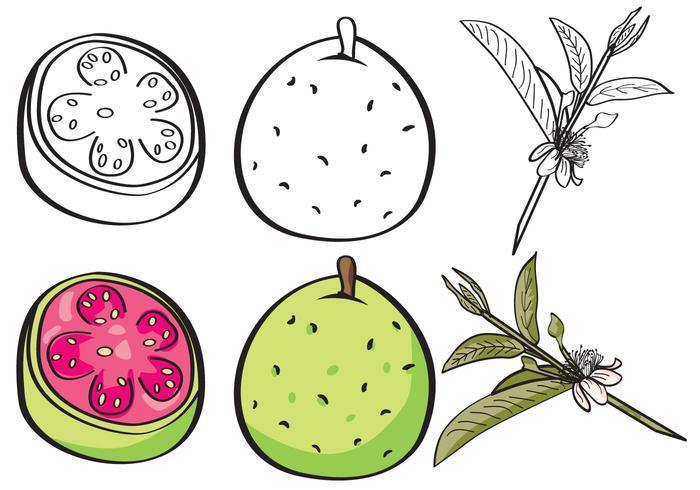 Guave Set