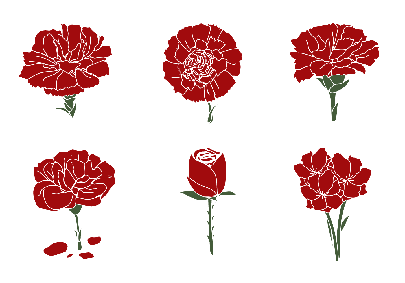 Free Carnation Vector - Download Free Vector Art, Stock Graphics ...