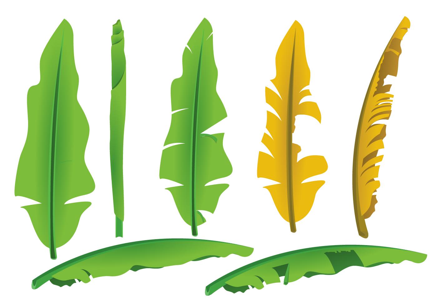 Banana Leaves Vectors - Download Free Vector Art, Stock Graphics ...