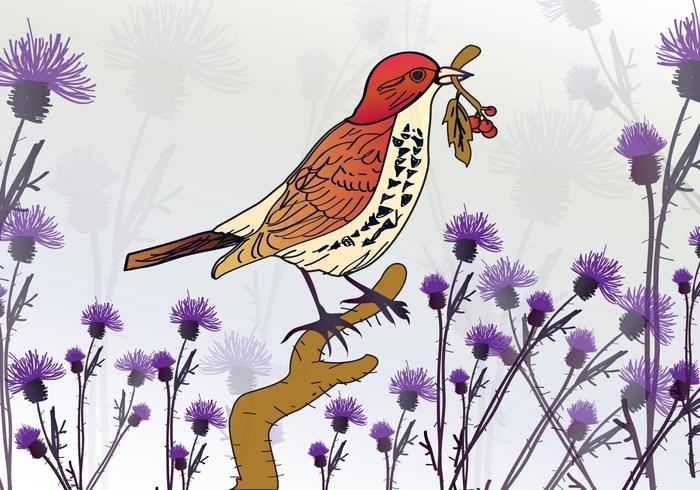 uccello sul cardo