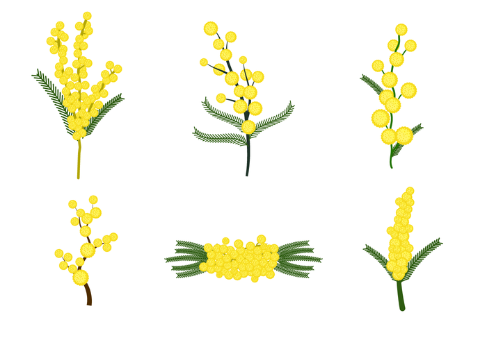Free Mimosa Flower Vector