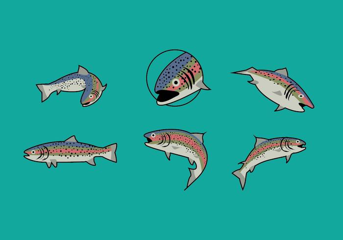 Rainbow Trout Illustrations