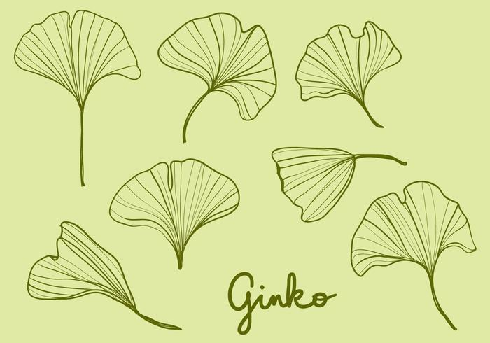 Hand Drawn Ginko Leaves