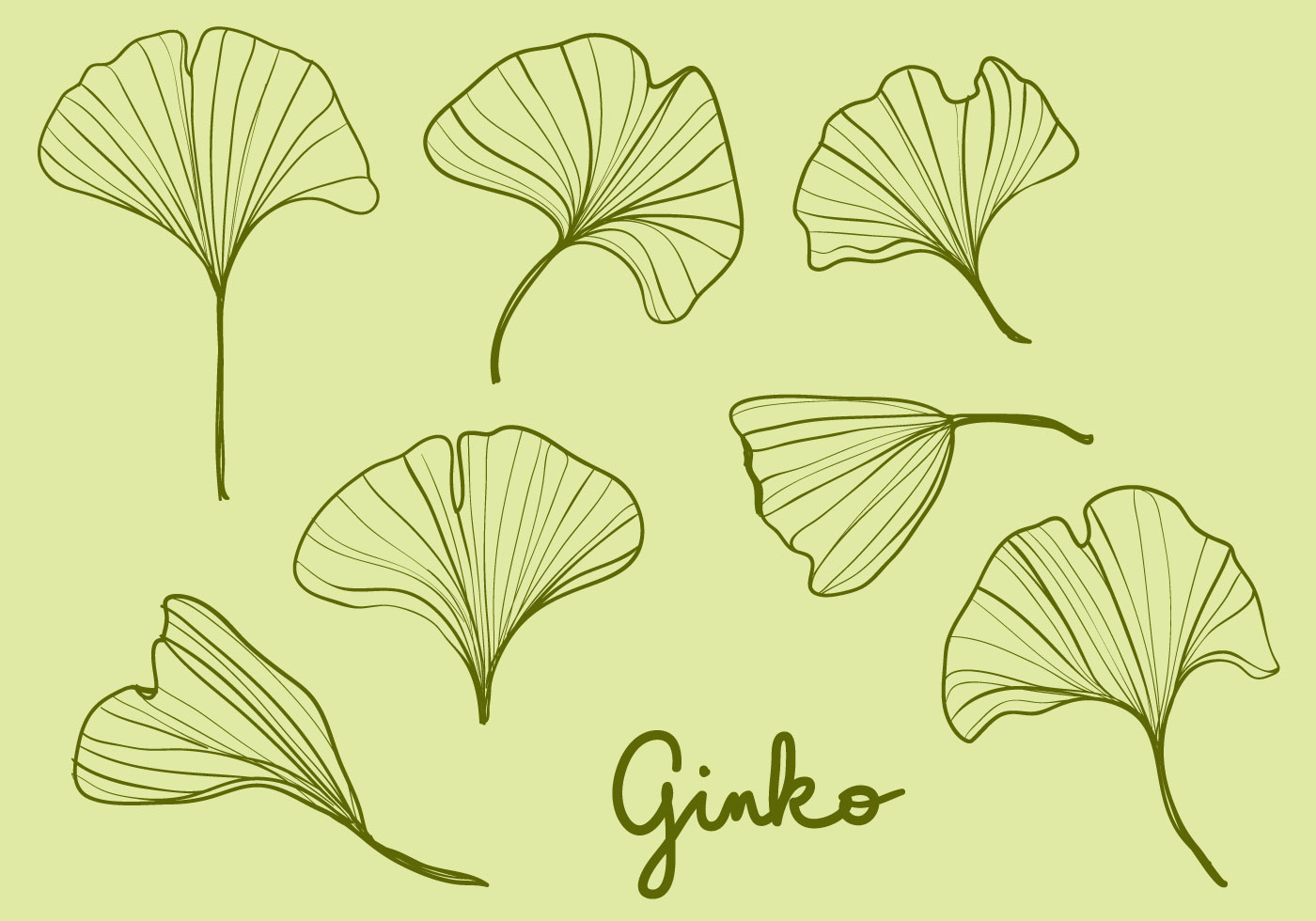Hand Drawn Ginko Leaves Download Free Vector Art Stock Graphics