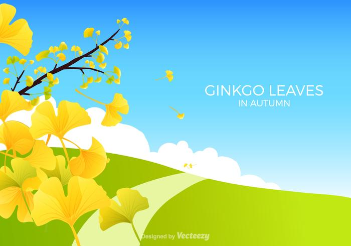 Kostenlose Ginkgo Bilboa Vektor-Illustration