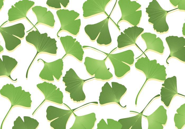 Vecteurs de feuilles de ginko