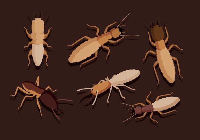 Vectores de la termita