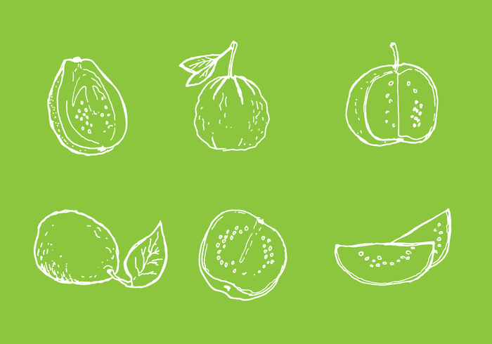 Simple Guava Line Vectors