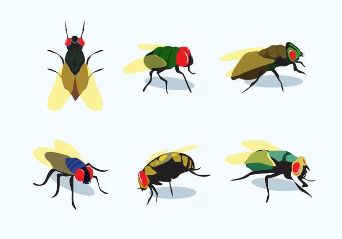 Firefly Vectors