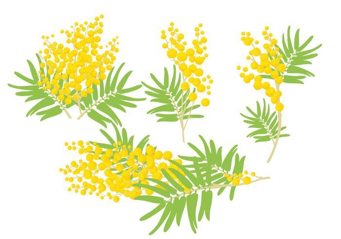Mimosa-vectoren
