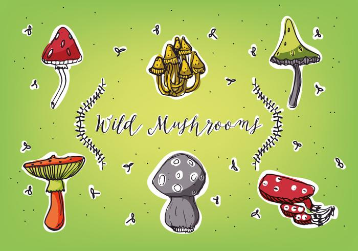 Different Types of Mushrooms Vector Background Collection