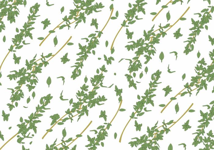 Thyme Vector Background
