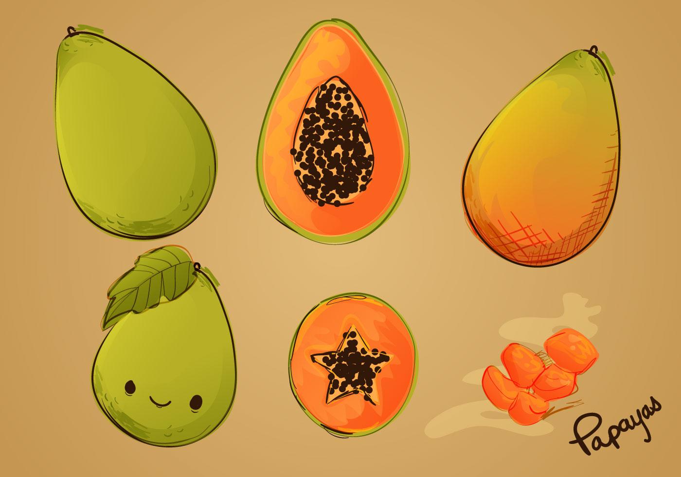 Sketched Papaya Vector Set Download Free Vector Art