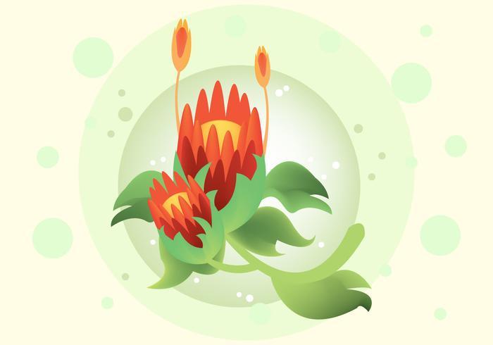 Kostenlose Protea Vektor-Illustration