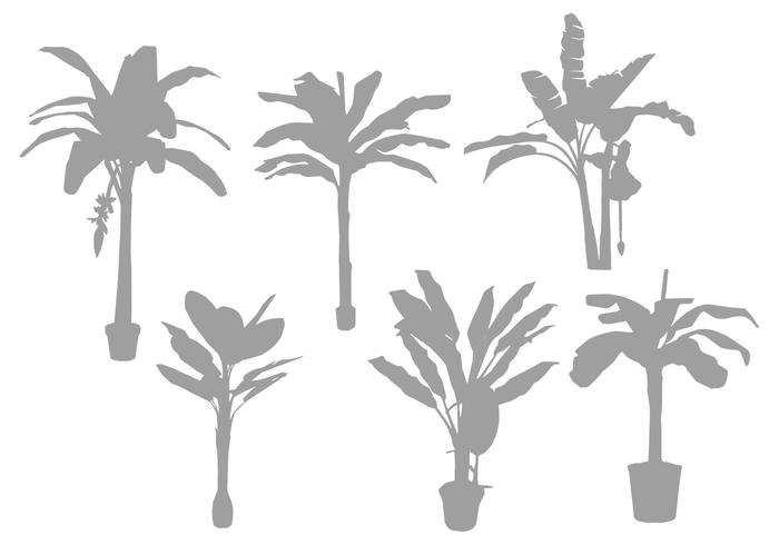 Banana Tree Silhouette Vectors