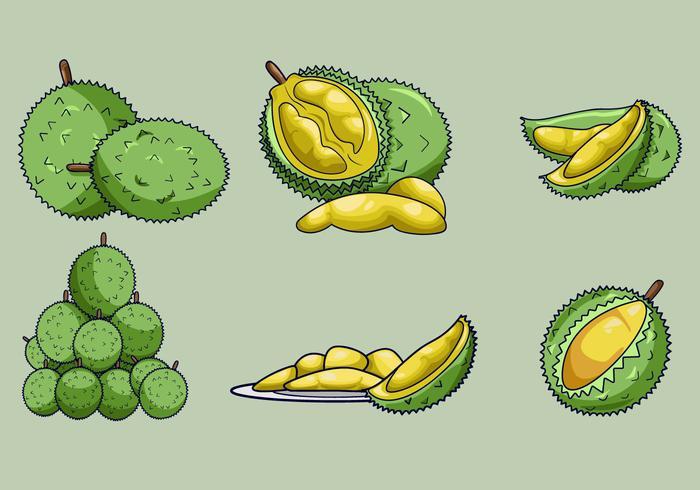 Delicious Durian Fruits Vector