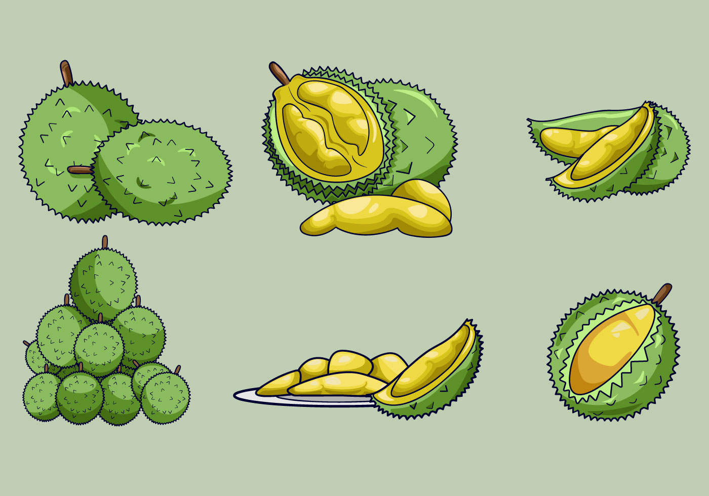 Free Download Png And Vector: Delicious Durian Fruits Vector