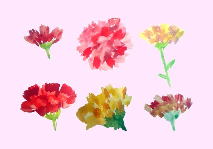 Free Watercolor Carnation Vector Pack