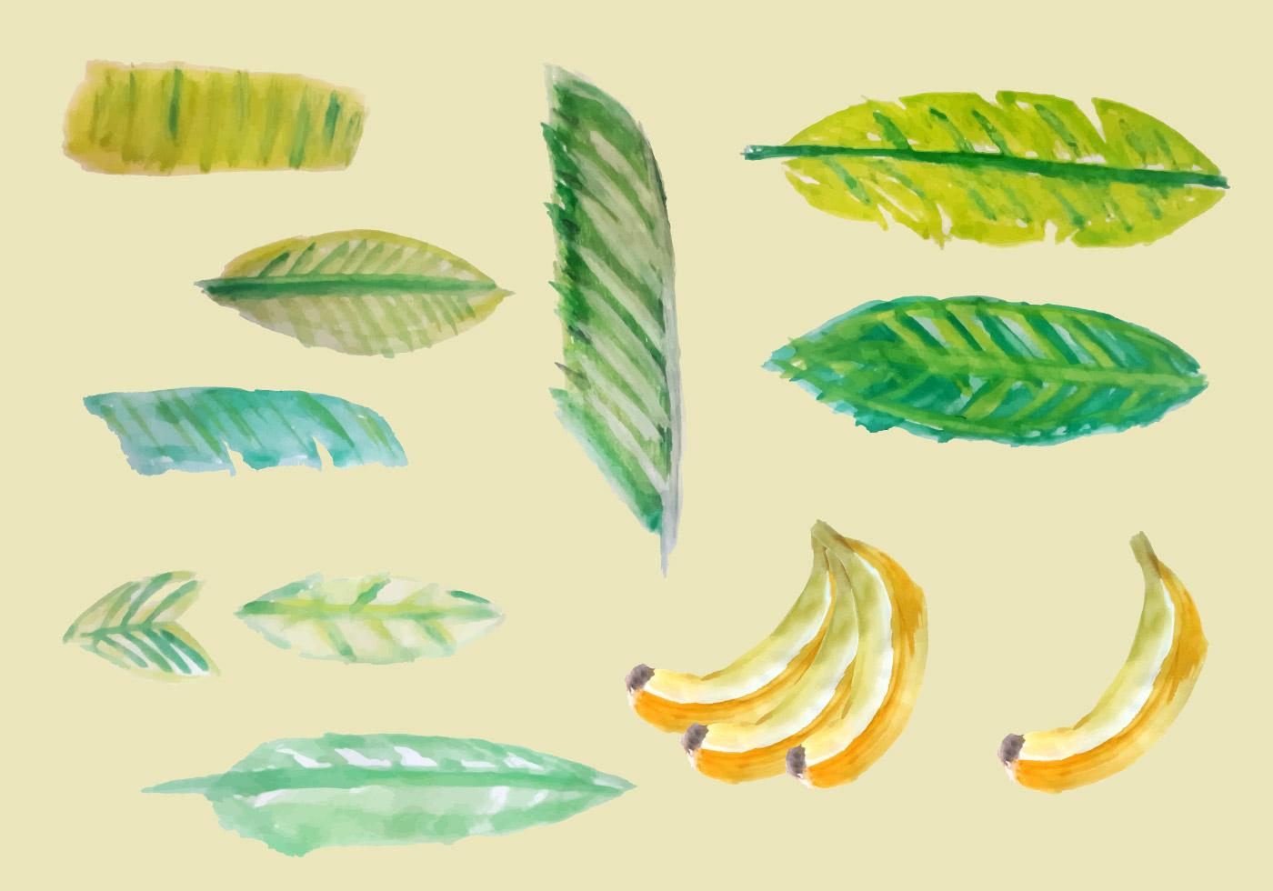 Free Banana Leaves Watercolor Vector - Download Free ...