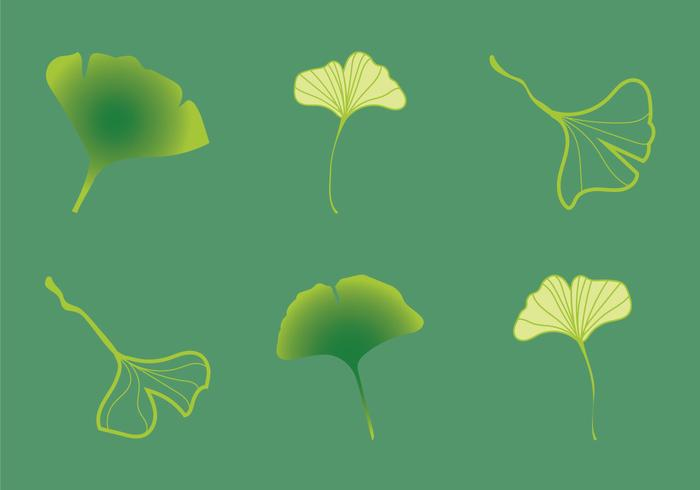 Free Ginko Vector Illustration