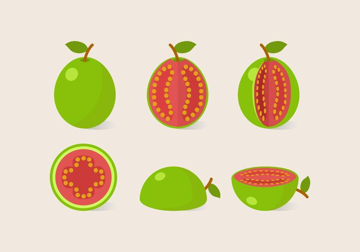 Vektor-Guave vektor