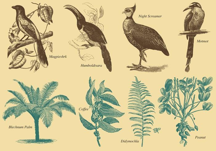 Brazil Flora And Fauna Vector Sketches