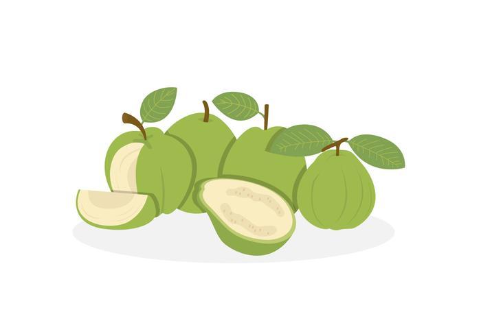 Guava Vectors