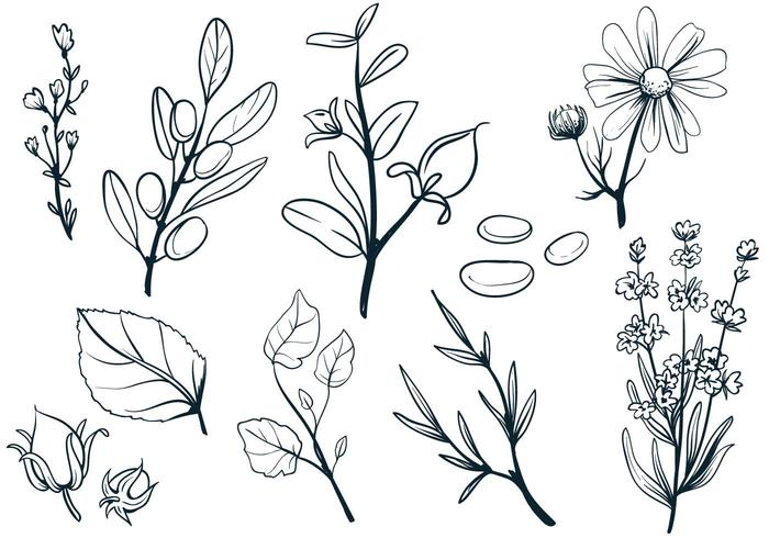 Cosmetic Herbs Vectors
