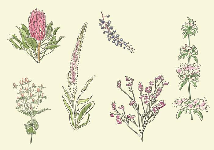 Sketchy Flower Vector Set