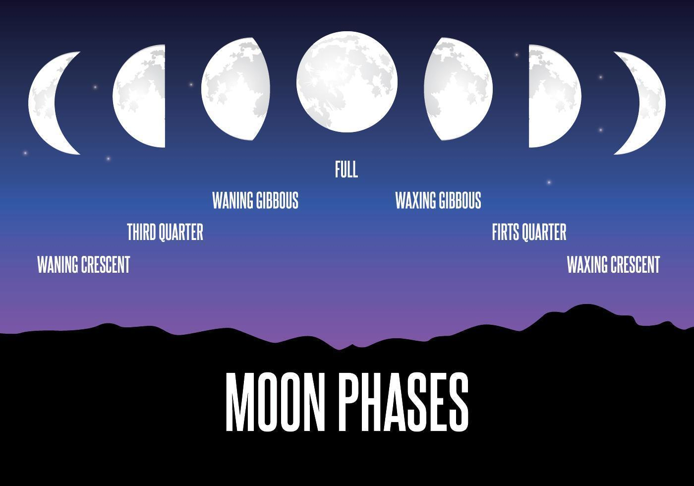 Moon Phase Illustration vector