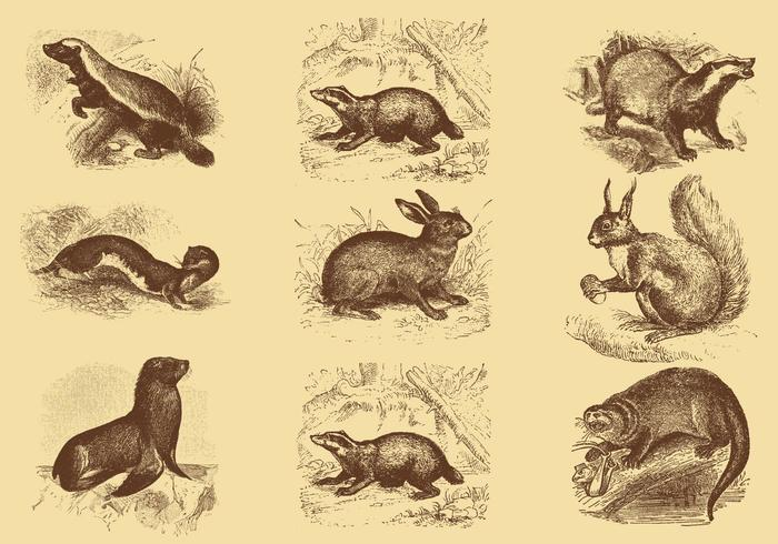 Old Style Drawing Mammal Vectors