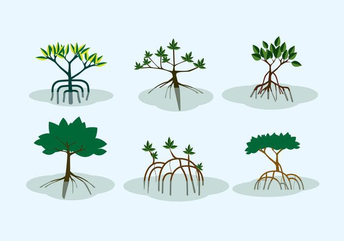 Mangrove Shrubs Vector