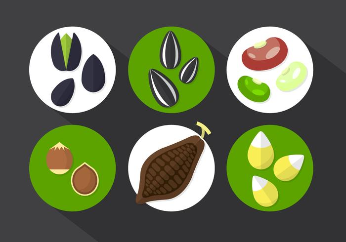 Cocoa Beans Vector Illustration