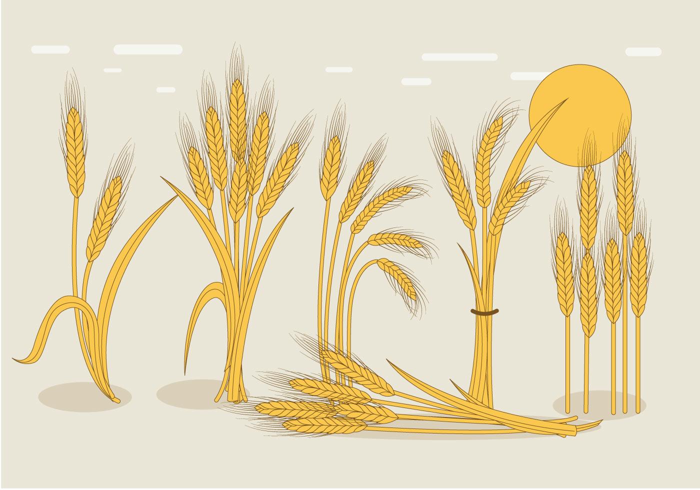 Wheat Stalk Vector - D...