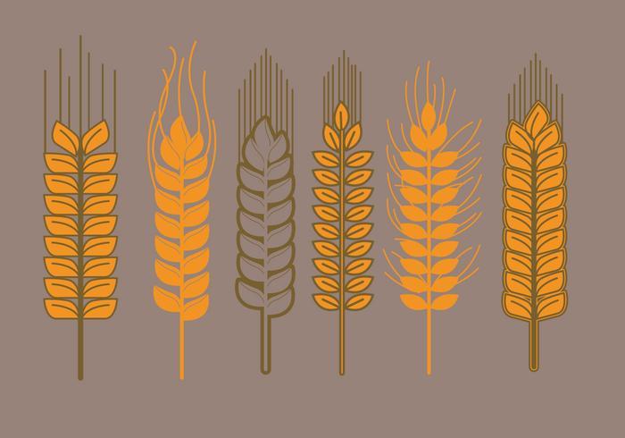 Wheat Stalk Vectors - ...